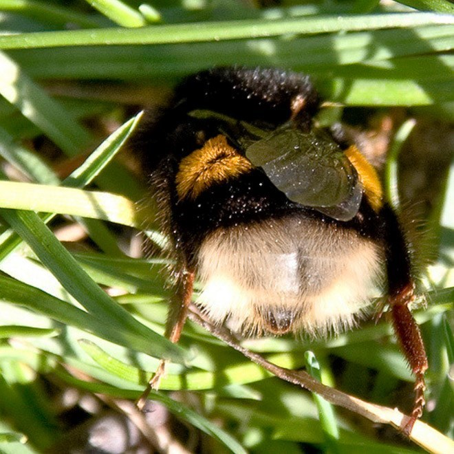 cute bee - Insect