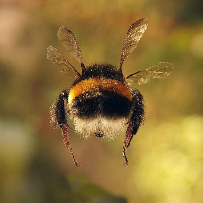 cute bee - Bee