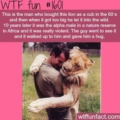 Lion fun fact of man who made friends with a lion who remembered him years later
