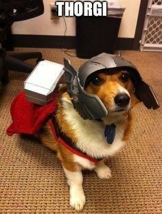 Dog - THORGI
