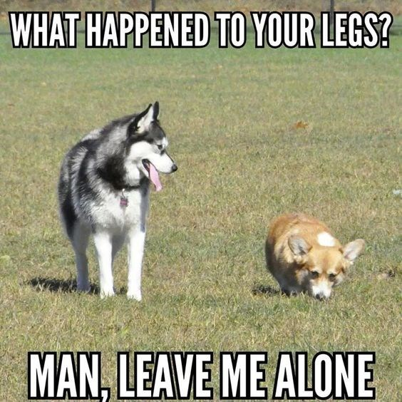 Dog - WHAT HAPPENED TO YOUR LEGS? MAN, LEAVE ME ALONE