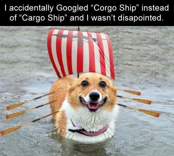 "Dog - I accidentally Googled ""Corgo Ship"" instea of ""Cargo Ship"" and I wasn't disapointed."