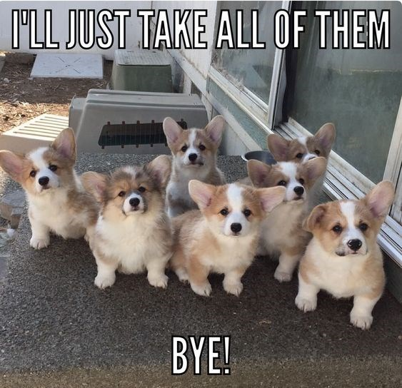 Dog - ILL JUST TAKE ALL OF THEM BYE!