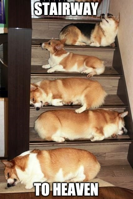 Dog - STAIRWAY TO HEAVEN