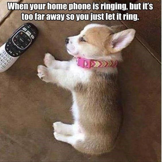 Dog - When your home phone is ringing, but it's too tar away so you just let it ring.
