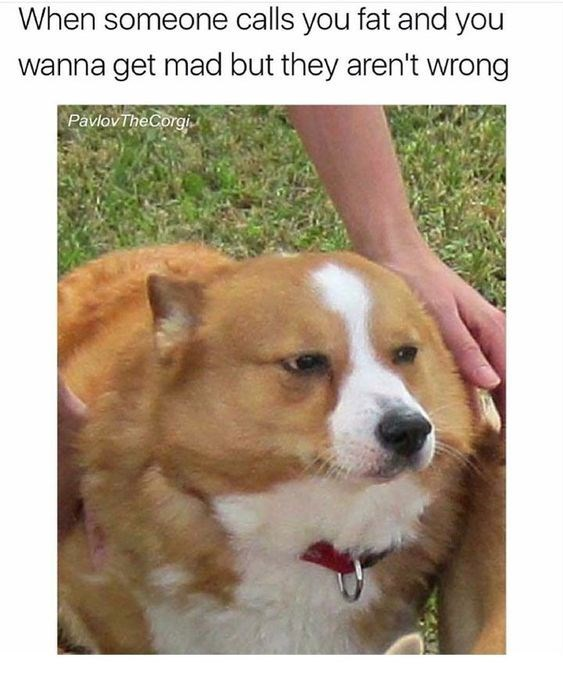 Dog - When someone calls you fat and you wanna get mad but they aren't wrong PavlovTheCorgi