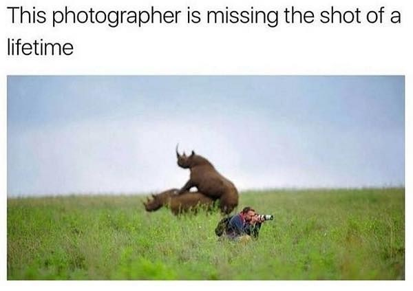Funny meme about rhinos.