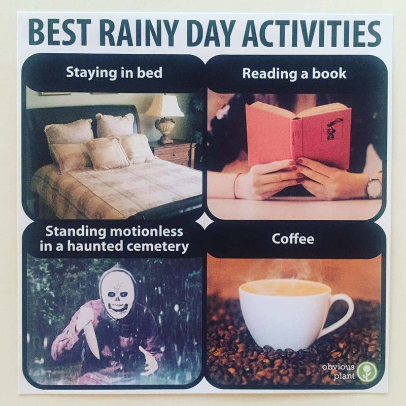 Drink - BEST RAINY DAY ACTIVITIES Staying in bed Reading a book Standing motionless in a haunted cemetery Coffee obvious plant