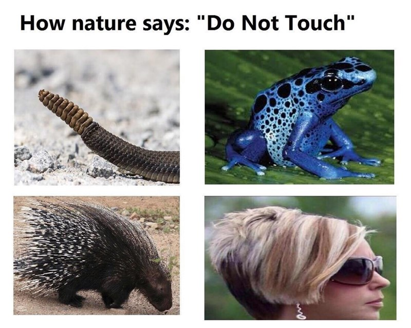 Funny meme about the haircuts of middle aged american women, do not touch.