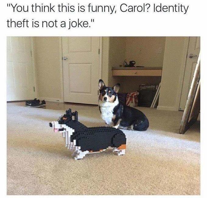 Funny meme about corgi identity theft.