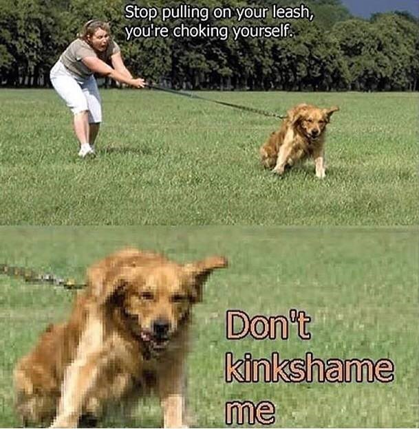 dank pun - Dog - Stop pulling on your leash, you're choking yourself Don't kinkshame me