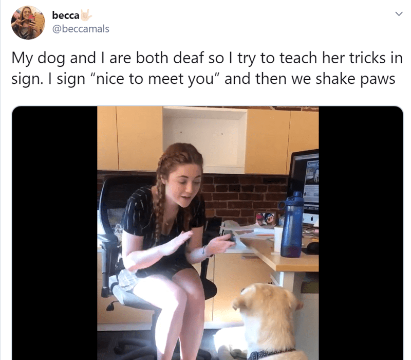 deaf dog tweets, deaf dog videos