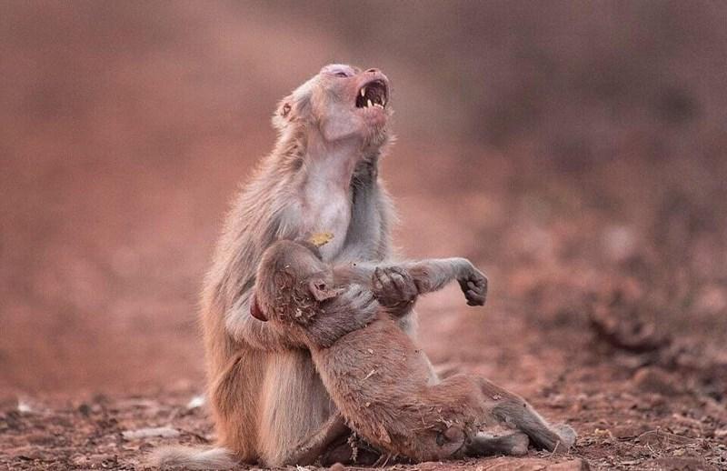 accidental renaissance - Mammal