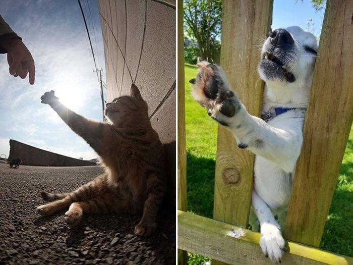 accidental renaissance - Lemur