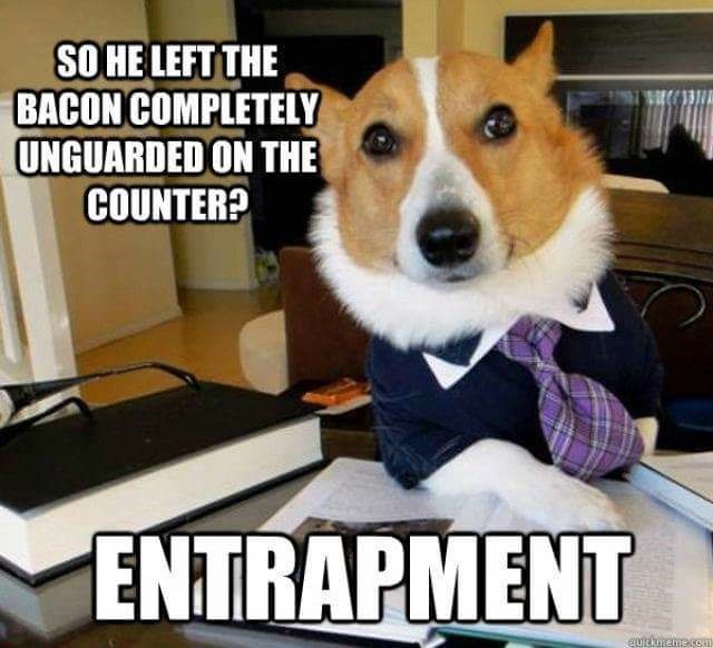 Dog - SO HE LEFT THE BACON COMPLETELY UNGUARDED ON THE COUNTER? ENTRAPMENT Eurckmehe.cam