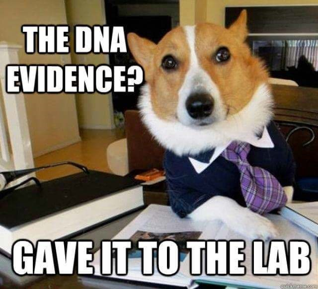 Dog - THE DNA EVIDENCE? GAVEIT TO THE LAB GURkimehe.8ea