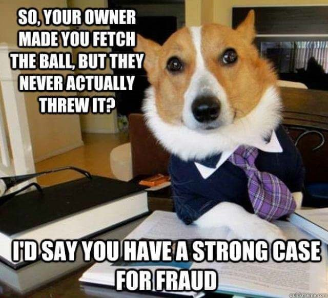 Dog - SO,YOUR OWNER MADEYOU FETCH THE BALL BUT THEY NEVER ACTUALLY THREW IT? UD SAY YOU HAVEA STRONG CASE FOR FRAUD Eutekmeme.com