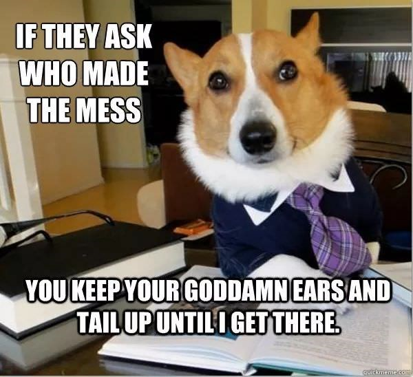Dog - IF THEY ASK WHO MADE THE MESS YOUKEEPYOUR GODDAMNEARSAND TAILUPUNTILIGET THERE cuickmeme.com
