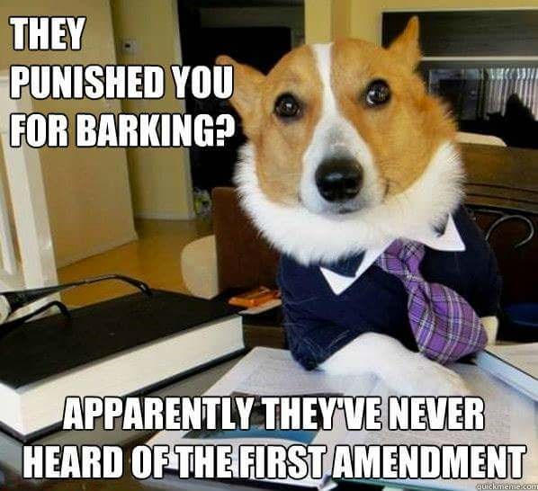 Dog - THEY PUNISHED YOU FOR BARKING? APPARENTLY THEYVENEVER HEARD OF THE FIRST AMENDMENT quickmeme.com