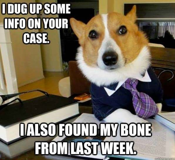 Dog - ODUGUP SOME INFOON YOUR CASE DALSO FOUND MY BONE FROMLAST WEEK. autckmeme.com