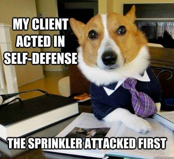 Dog - MY CLIENT ACTED IN SELF-DEFENSE THE SPRINKLERATTACKED FIRST quickmeme com