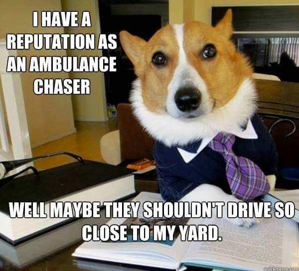 Dog - IHAVE A REPUTATION AS AN AMBULANCE CHASER WELL MAYBE THEY SHOULDNT ORIVE SO CLOSE TO MY YARD. quickmenie.com