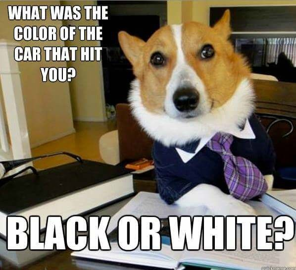 Dog - WHAT WAS THE COLOR OF THE CAR THAT HIT YOU? BLACKOR WHITE? ग ग