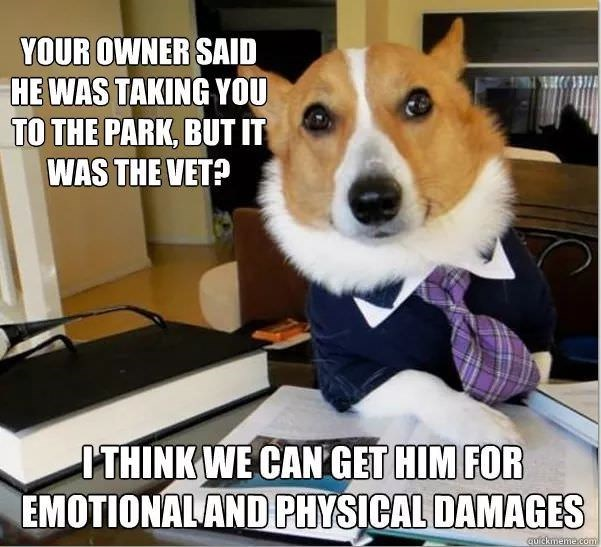 Dog - YOUR OWNER SAID HE WAS TAKING YOU TO THE PARK, BUT IT WAS THE VET? ITHINK WE CAN GET HIM FOR EMOTIONALAND PHYSICAL DAMAGES quickmeme.com