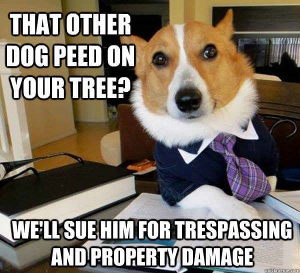 Dog - THAT OTHER DOG PEED ON YOUR TREE? WELL SUE HIM FOR TRESPASSING AND PROPERTY DAMAGE quickmeme.com
