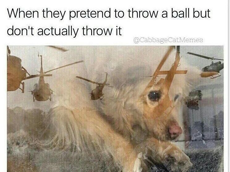 Funny meme aboutdog with PTSD