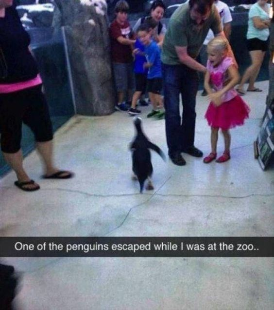 snapchat - Dog - One of the penguins escaped while I was at the zoo..