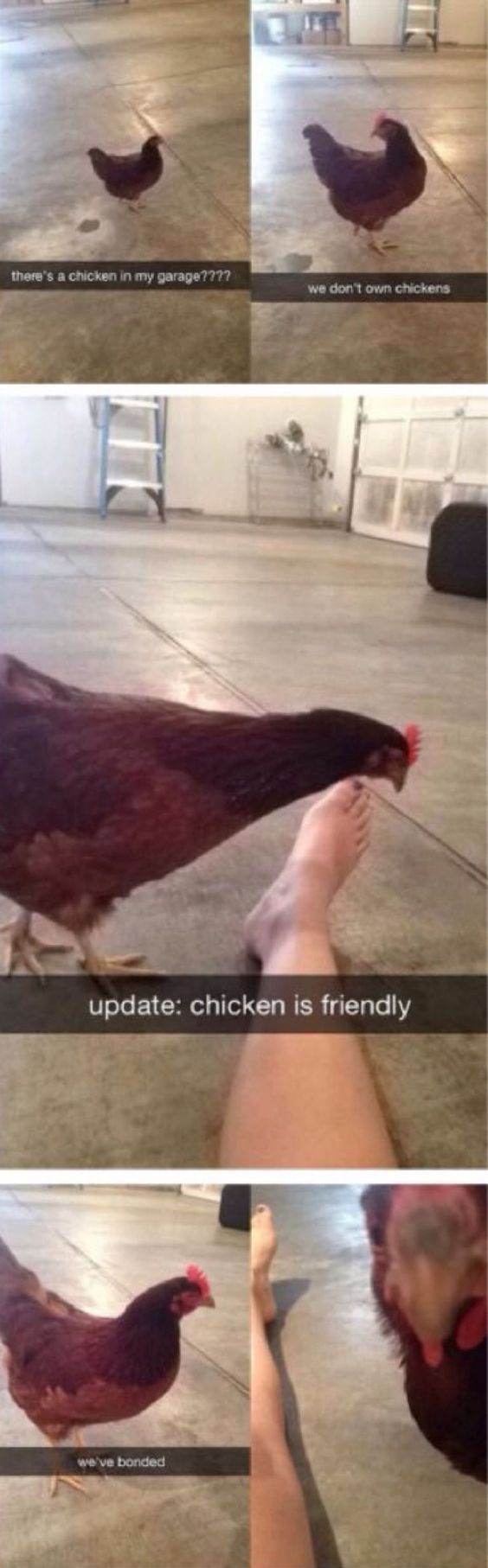 snapchat - Hair - there's a chicken in my garage???? we don't own chickens update: chicken is friendly we've bonded