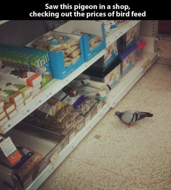 snapchat - Sky - Saw this pigeon in a shop, checking out the prices of bird feed Trill