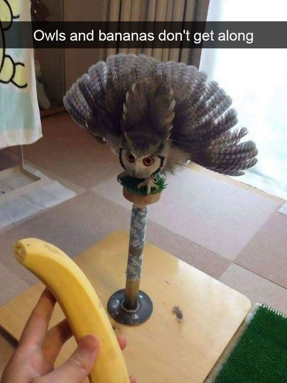 snapchat - Banana - Owls and bananas don't get along