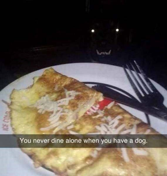 Dish - You never dine alone when you have a dog. ICE CO