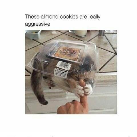 Human - These almond cookies are really aggressive dit
