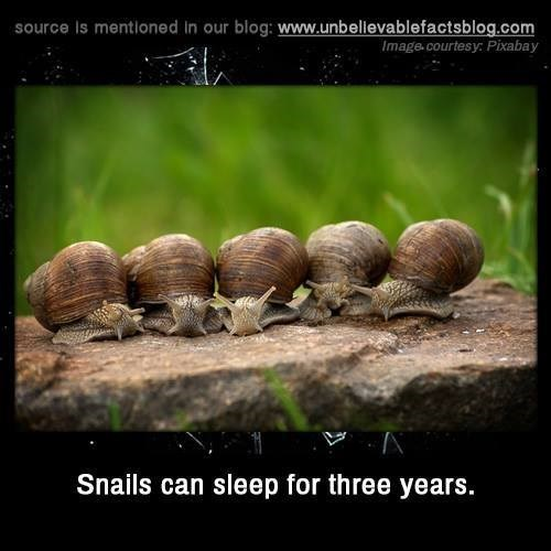 Snails and slugs - source Is mentioned in our blog: www.unbellevablefactsblog.com Image.courtesy Pixabay Snails can sleep for three years.