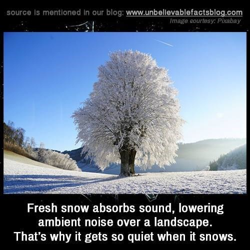 Sky - source Is mentioned In our blog: www.unbellevablefactsblog.com Image courtesy: Pixabay Fresh snow absorbs sound, lowering ambient noise over a landscape. That's why it gets so quiet when it snows.