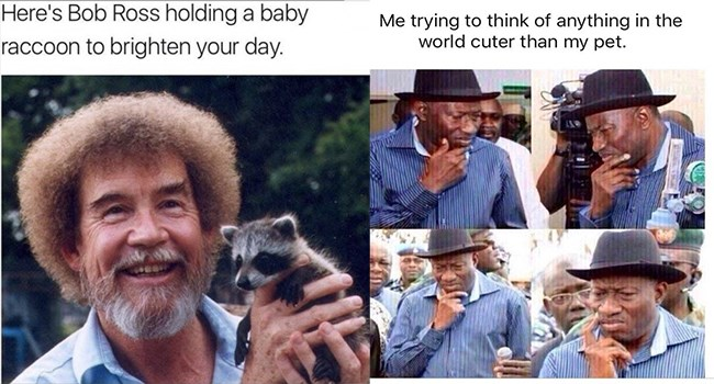 Wholesome memes, Animal wholesome memes