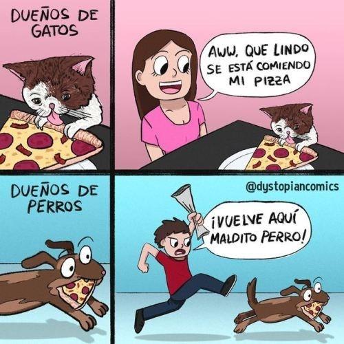 la diferencia entre un gato y un perro comiendose la pizza