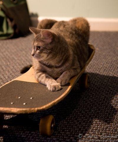 Cat - OChFKSHGempat