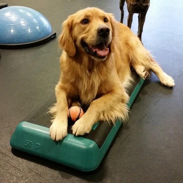 gym animals - Dog - SEP