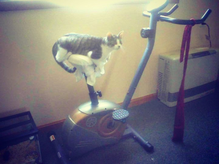 gym animals - Exercise equipment