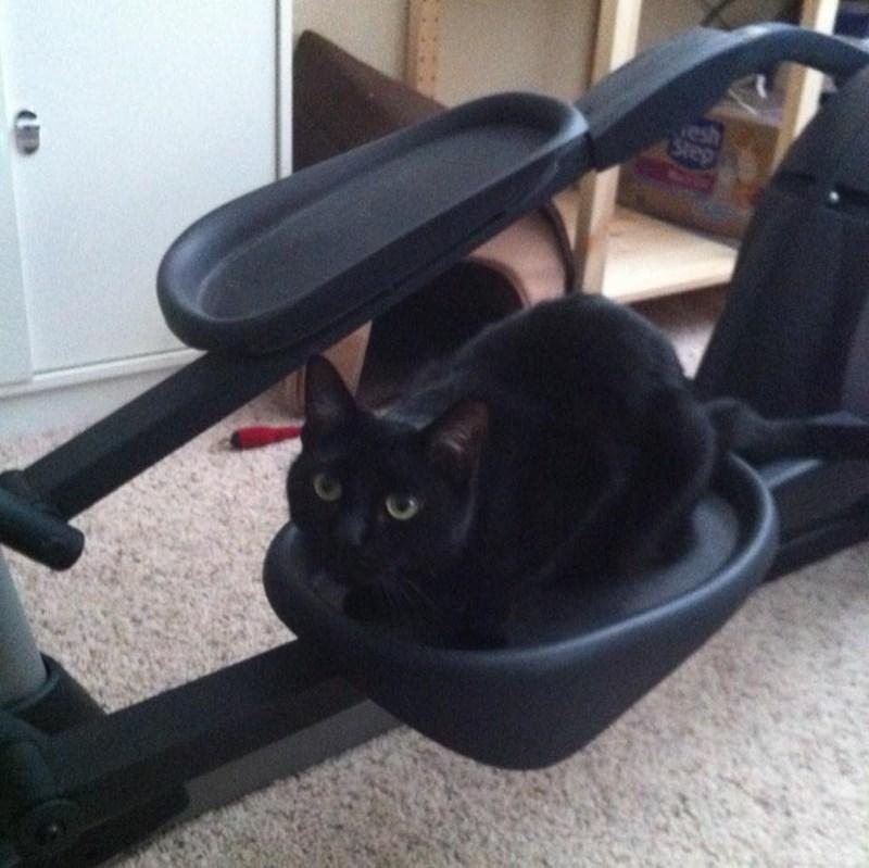 gym animals - Cat