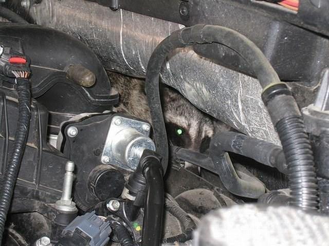 Auto part
