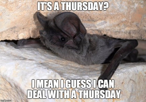 meme - Bat - ITSA THURSDAY? IMEANI GUESS ICAN DEAL WITH A THURSDAY