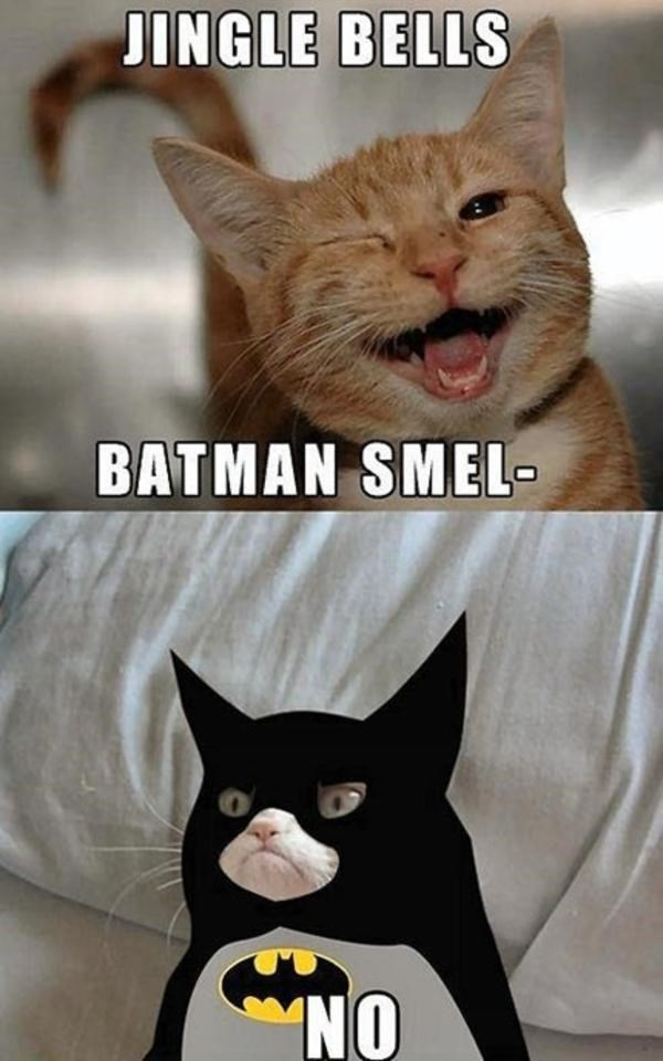 meme - Cat - JINGLE BELLS BATMAN SMEL- NO