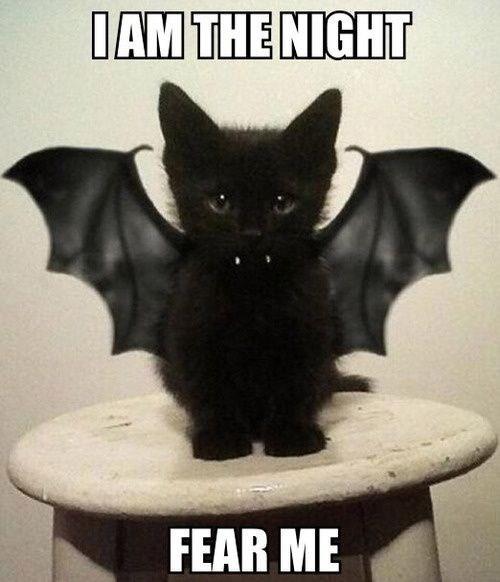 meme - Cat - IAM THE NIGHT FEAR ME