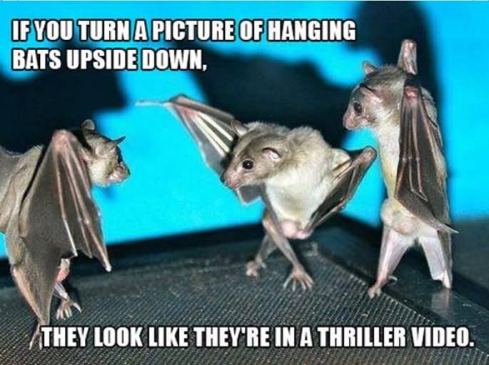 meme - Photo caption - IF YOU TURN A PICTURE OF HANGING BATS UPSIDE DOWN, THEY LOOK LIKE THEY'RE IN A THRILLER VIDEO.