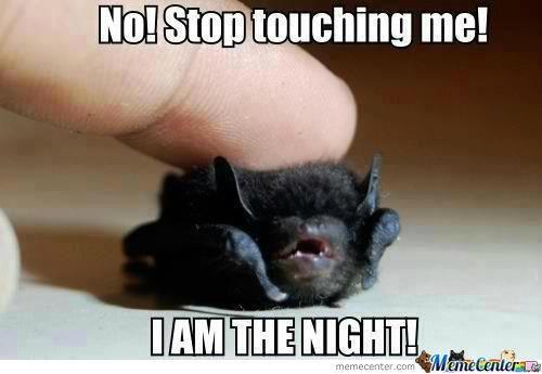 meme - Bat - No!Stop touching me! IAM THE NIGHT! ManeCenterae memecenter.com